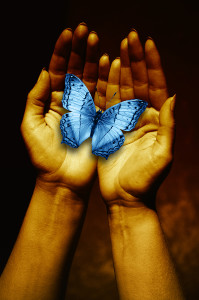 Blue butterfly held in palms of hands