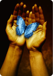 blue butterfly in palm of hands