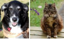 black and white old dog and brown tabby cat